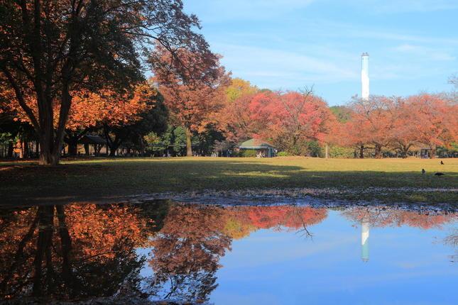 紅葉が綺麗な砧公園