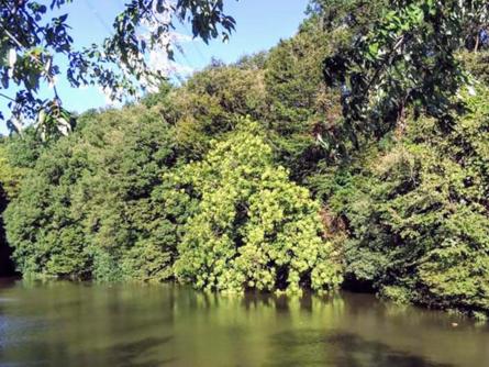 自然溢れる真光寺公園