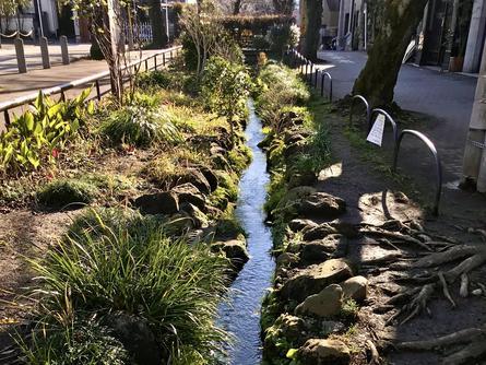 四季折々の草花を楽しめる、北沢川緑道