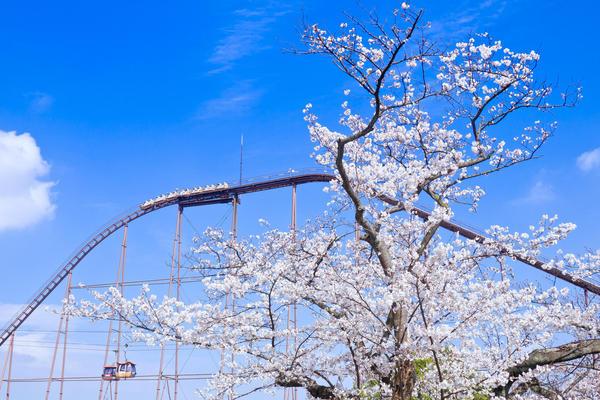 桜の中を疾走! ハイスピードでお花見