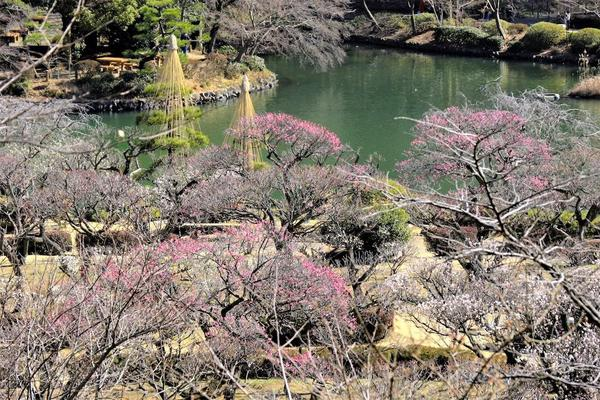 春は梅から! 自然と歴史を感じる公園