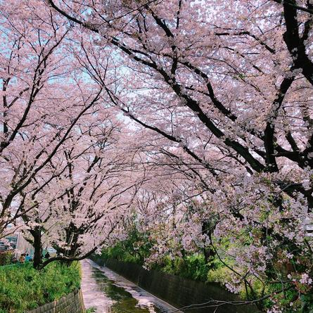 桜の季節が待ち遠しい
