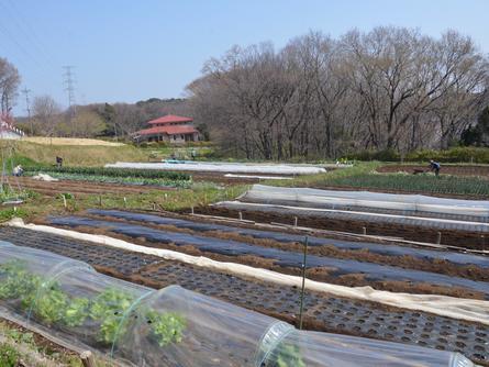 体験農園を楽しむ