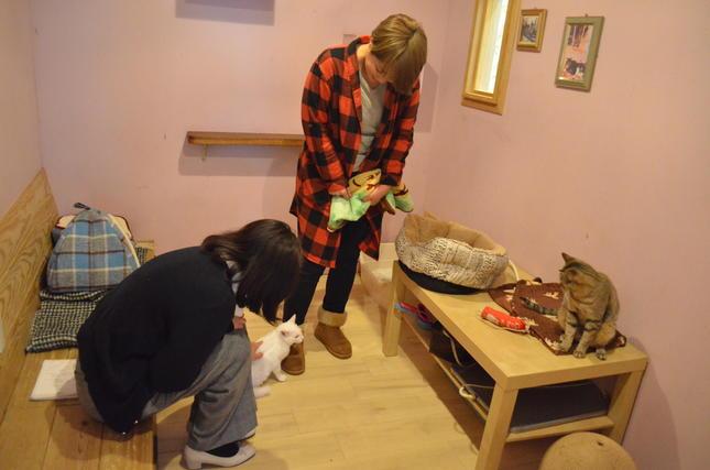 保護犬、保護猫に新しい出会いを提供するカフェ