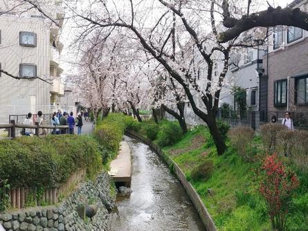登戸駅から続く桜の名所