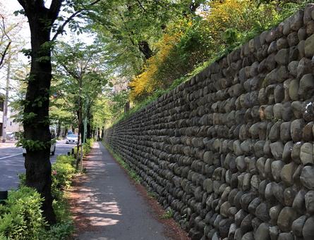 千歳通り ワンコとお花のお散歩コース