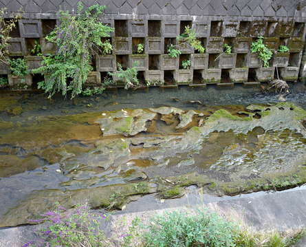 五反田川の甌穴群