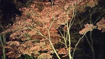 町田薬師池公園四季彩の杜 薬師池 紅葉まつり
