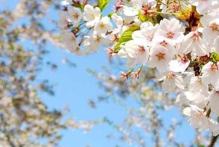 小田急沿線の桜スポット12選!絶対に押さえたい名所をご紹介♪