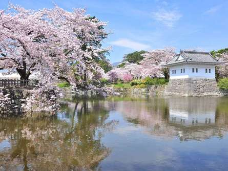 小田原でお花見をするなら「小田原桜まつり」がおすすめ!