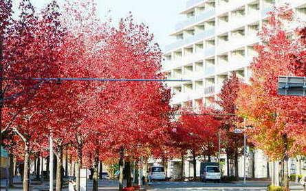 彩る街路樹