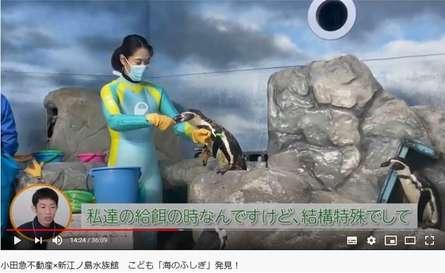 【プレゼント企画あり】新江ノ島水族館&小田急不動産のコラボ動画を配信!