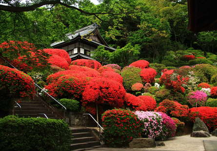 色鮮やかなツツジの花に埋もれてみよう!