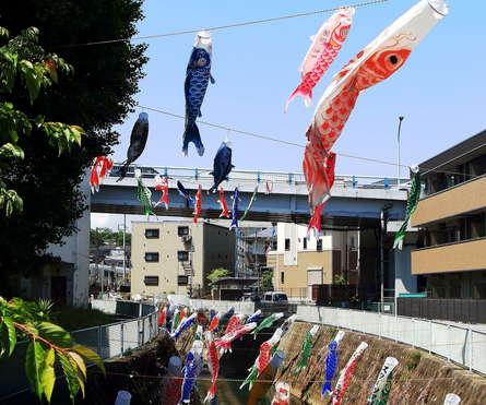五反田川沿いに季節の風物詩 こいのぼり!