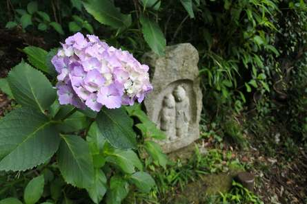 紫陽花と羅漢様に心洗われる時間「浄慶寺」