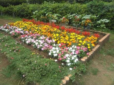 桜、あじさいなど季節の花であふれる公園