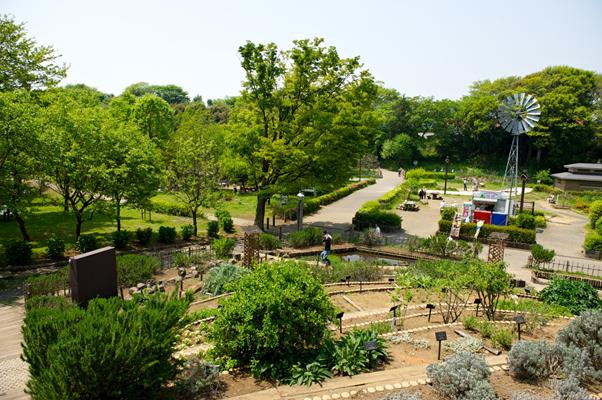 地域の憩いの場!緑あふれる「ふれあいの森」の楽しみ方をご紹介!  地元の人たちの憩いの場「ふれあいの森」とは?